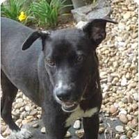 Adopt A Pet :: Lady - Nashville, TN