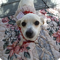 Adopt A Pet :: TULIP - Atascadero, CA