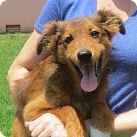 Adopt A Pet :: Daley - Greenville, RI