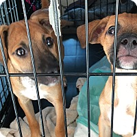 Adopt A Pet :: Harley & Quinn - Los Angeles, CA