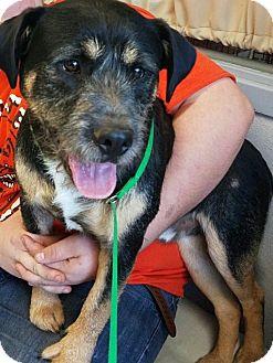 Terrier (Unknown Type, Medium) Mix Dog for adoption in Yukon, Oklahoma - Nemo