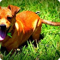 Adopt A Pet :: Christopher ~ meet me! - Glastonbury, CT