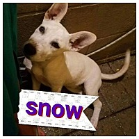 Adopt A Pet :: Snow - LAKEWOOD, CA