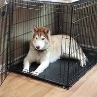 Adopt A Pet :: Babydoll - Shingleton, MI