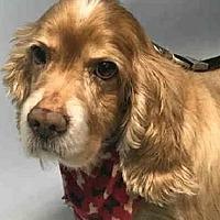 Adopt A Pet :: CASH - Flushing, NY