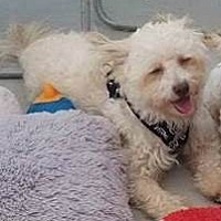 Adopt A Pet :: Casper - San Diego, CA