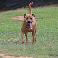 Adopt A Pet :: Star - Sumter, SC