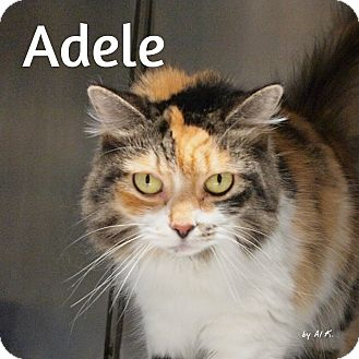 Polydactyl/Hemingway Cat for adoption in Pleasantville, New Jersey - Adele