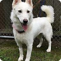 Adopt A Pet :: Xena - Allison Park, PA