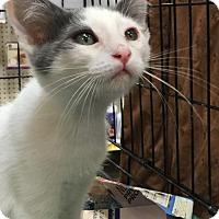 Adopt A Pet :: POLLOX - Modesto, CA