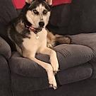 Adopt A Pet :: Aurora (COURTESY POST)