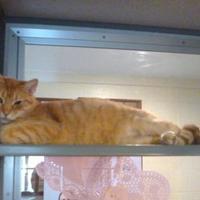Adopt A Pet :: Carlisle - Glasgow, KY