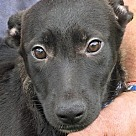 Adopt A Pet :: Merak