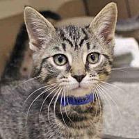 Adopt A Pet :: TATER TOT - Fort Wayne, IN