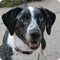 Adopt A Pet :: ALLIE-JJ - Roundup, MT
