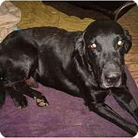 Adopt A Pet :: Sammy - North Jackson, OH
