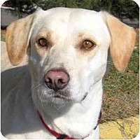 Adopt A Pet :: BAILEY - Wakefield, RI