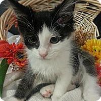 Adopt A Pet :: Boppit (Bop It) - Clearfield, UT