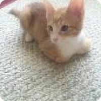 Adopt A Pet :: Todd - Port Republic, MD