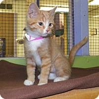Adopt A Pet :: Monster - Dover, OH