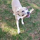 Adopt A Pet :: Felicity