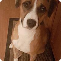 Adopt A Pet :: Marlin - Houston, TX