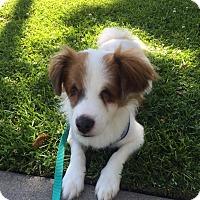 Adopt A Pet :: Hope - La Mirada, CA