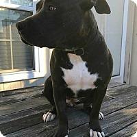Adopt A Pet :: Nala - Kansas City, MO