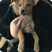 Adopt A Pet :: Frosty - Owensboro, KY