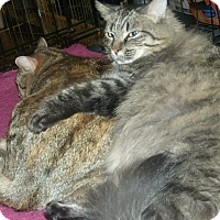 Adopt A Pet :: Brianna-$35.00 - Buford, GA