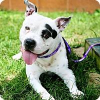 Adopt A Pet :: Porkchop - Appleton, WI