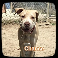 Adopt A Pet :: CHANCE - Ocala, FL