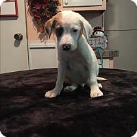 Adopt A Pet :: Mason - Kittery, ME