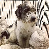 Adopt A Pet :: Maggie - Pompton Lakes, NJ