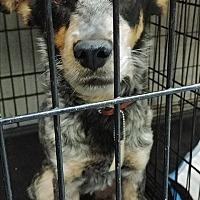 Adopt A Pet :: Bubba - Ogden, UT