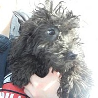 Adopt A Pet :: Benny ADOPTED!! - Antioch, IL