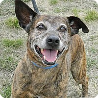 Adopt A Pet :: Karorot - Cheyenne, WY
