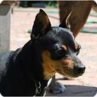 Adopt A Pet :: Hans - Nashville, TN