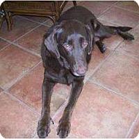 Adopt A Pet :: Star - Altmonte Springs, FL