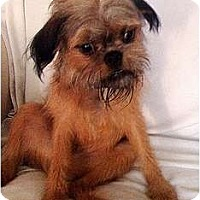 Adopt A Pet :: DENVER in Savannah, GA. - Cumming, GA
