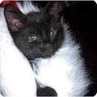 Adopt A Pet :: Cole - Davis, CA