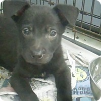 Adopt A Pet :: Ember - Philadelphia, PA