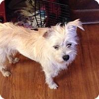 Adopt A Pet :: Jackson - North Little Rock, AR