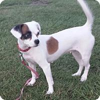 Adopt A Pet :: MOLLY - Wilmington, NC