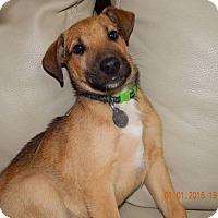 Adopt A Pet :: Hon - Knoxville, TN