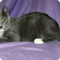 Adopt A Pet :: Melina - Powell, OH