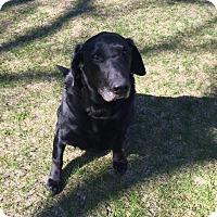 Adopt A Pet :: Tuko - Minneapolis, MN