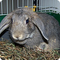 Adopt A Pet :: Stormy - Alexandria, VA