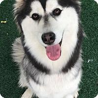 Adopt A Pet :: Everest - Chula Vista, CA
