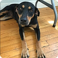 Adopt A Pet :: Halli in CT - East Hartford, CT